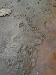 clay tracks